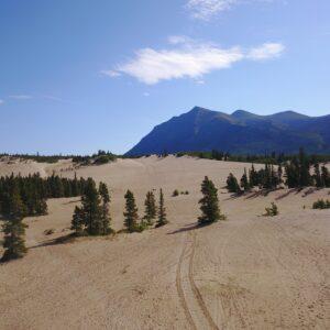 Carcross Desert Yukon - Kleinste Wueste der Welt